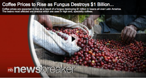 Climate Change Coffee Prices rise